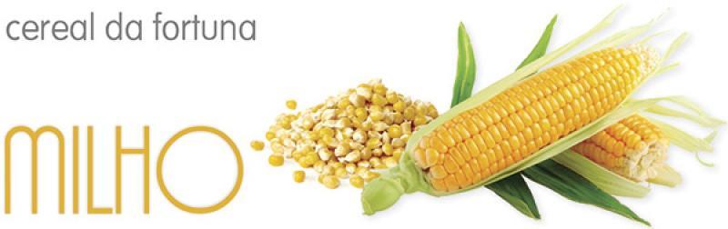 alimentos-sagrados-milho-nosso-blog.jpg